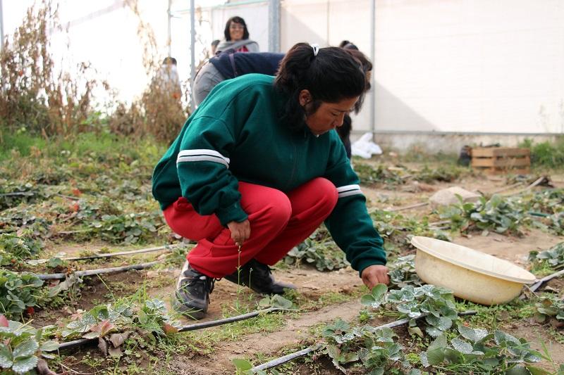 Apoyo de Concauce a Fundacion Mateo Quinto Puebla (5)